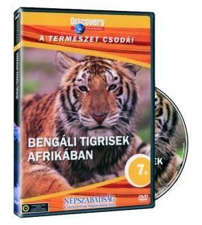 Bengáli tigrisek afrikában (DVD)