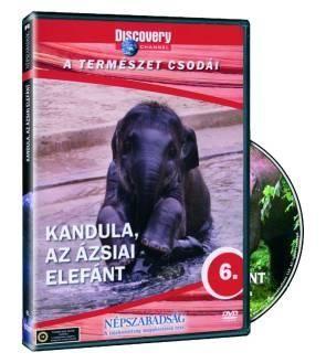 Kandula: Az ázsiai elefánt (DVD)