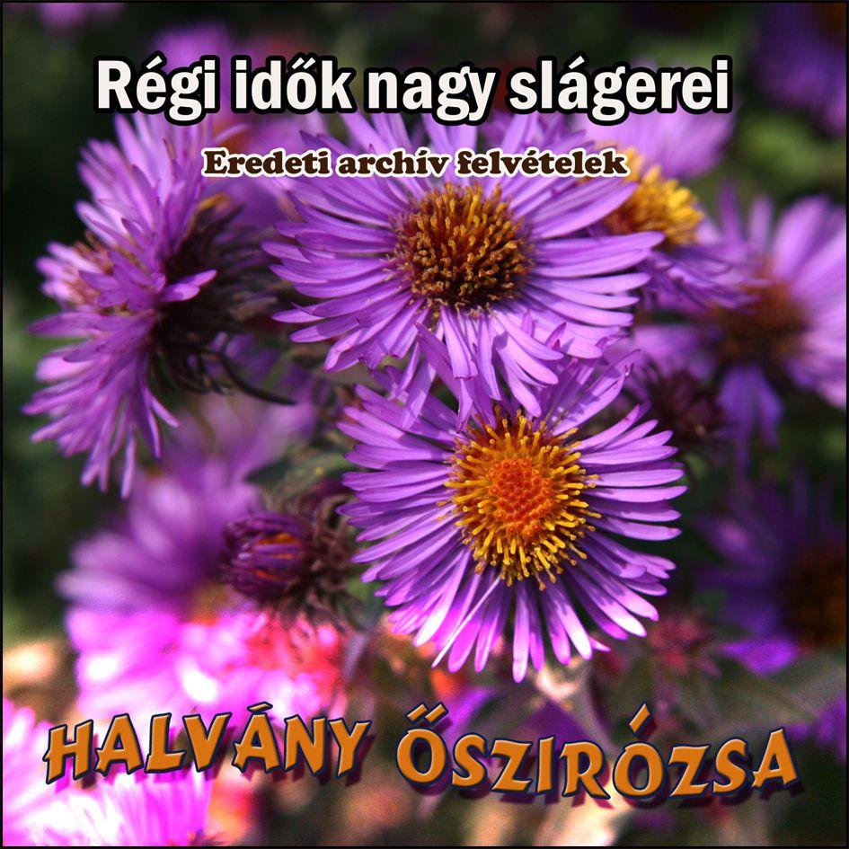 Halvány őszirózsa (CD)